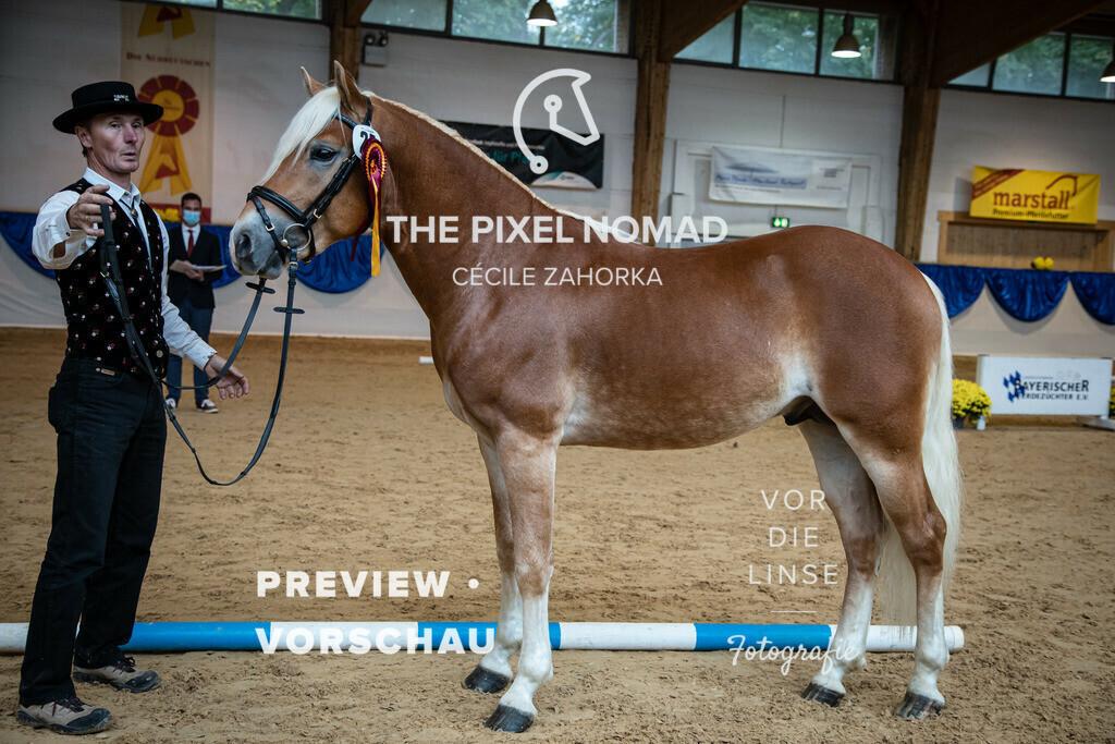 201011-KoerM-25-N-Power030 | N-Power v. Neymar, a.d. Monique v. Arogno Horse Gym's Franzl Edelbluthaflinger Foto: www.vor-die-linse.de