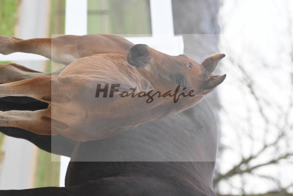 Kat-Nr. 8 HF Dynamic Dream 6210260