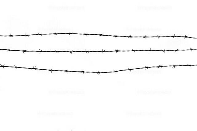 Stacheldraht | Stacheldraht über weißem Hintergrund