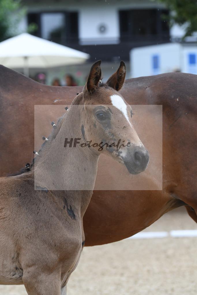 Kat-Nr. 9 HF Marburgs Floricello_Marburg_2621084