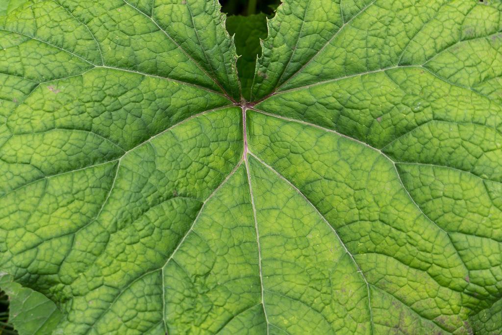 Struktur eines Blattes