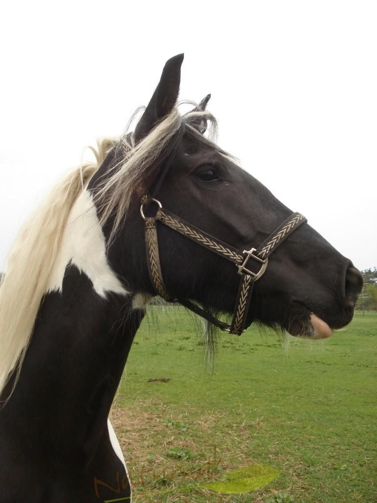 Pferd im Glück