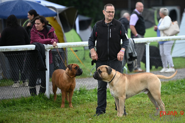 Hundeausstellung CACIB  3 Fehraltorf    CACIB 3, Fehraltorf SUMMER in Fehraltdorf  29.08.2021 Foto: Leo Wyden