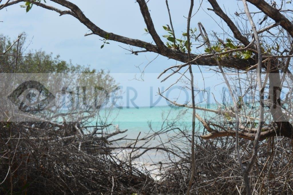 Bilder vom Meer | Blick aus dem Inneren der Insel Cayo Jutías auf das Meer