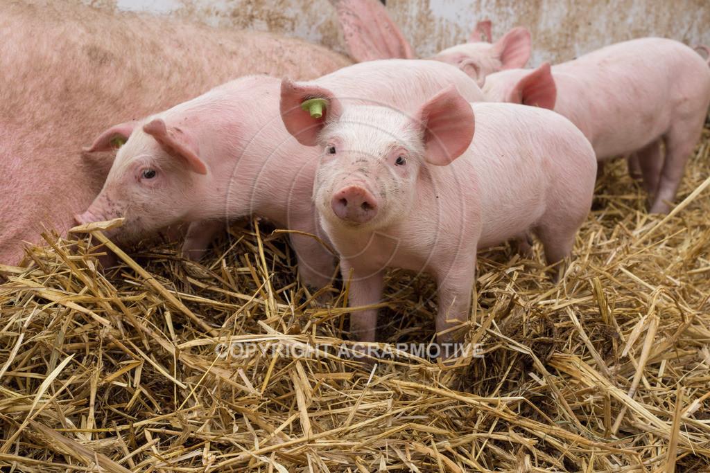 20160705-IMG_7943   glückliche Schweine