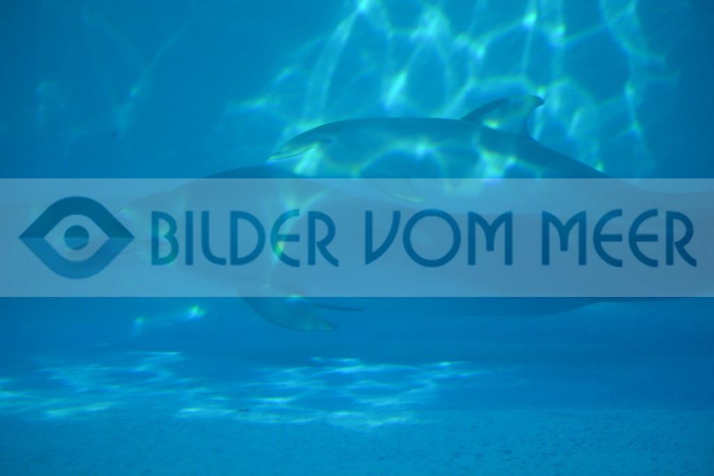 Bilder Delfin | Foto Delfin Mutter und Baby