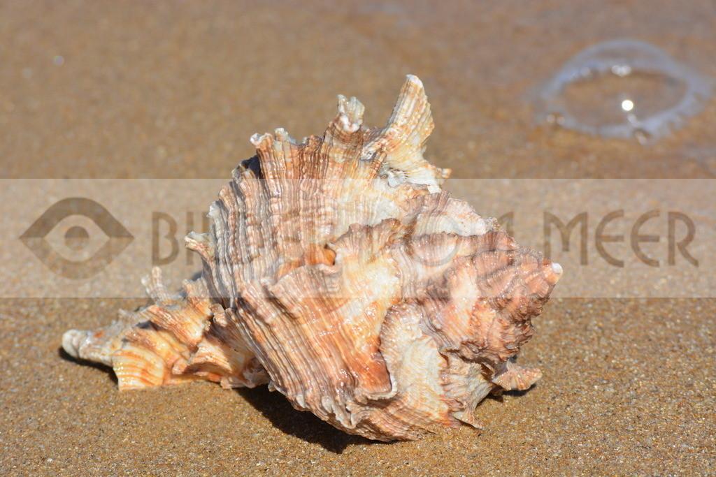 Muschel Bilder am Strand | Muschelbilder vom Meer
