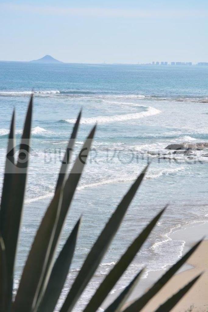Strand Bilder Agave | Aga veam Sgtrandvom Mar Menor in Spanien