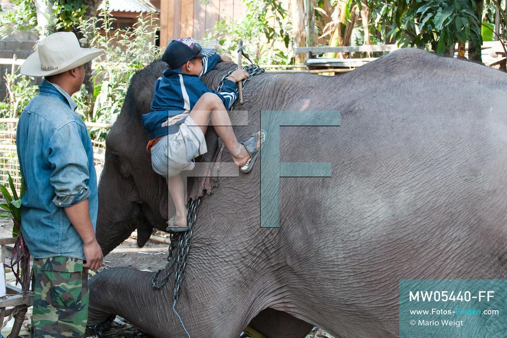 MW05440-FF | Laos | Provinz Sayaboury | Vieng Keo | Reportage: Pey Wan im Elefantendorf | Unter den aufmerksamen Augen seines Vaters Hom Peng klettert Pey Wan auf den Elefant Boun Van. Der achtjährige Pey Wan lebt im Elefantendorf Vieng Keo im Nordwesten von Laos. Im Dorf wohnen ca. 500 Leute mit 17 Arbeitselefanten. Sein Vater Hom Peng hat einen 31 Jahre alten Elefantenbullen namens Boun Van, mit dem er im Holzfällercamp im Dschungel arbeitet. Zum Elefantenfest schmückt Pey Wan den Jumbo und darf mit ihm an der Prozession durchs Dorf teilnehmen. Pey Wan möchte, wie sein Vater, später auch Elefantenführer werden.  ** Feindaten bitte anfragen bei Mario Weigt Photography, info@asia-stories.com **