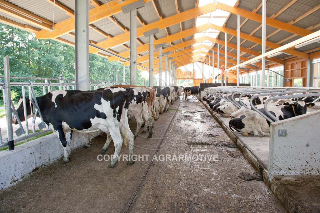 20110627-IMG_3052 | Milchkühe im Boxenlaufstall