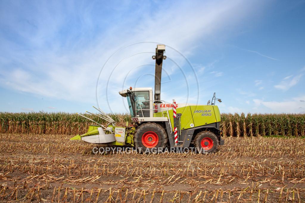20080914-IMG_8929 | Silomais wird gehäckselt - AGRARFOTO Bilder aus der Landwirtschaft