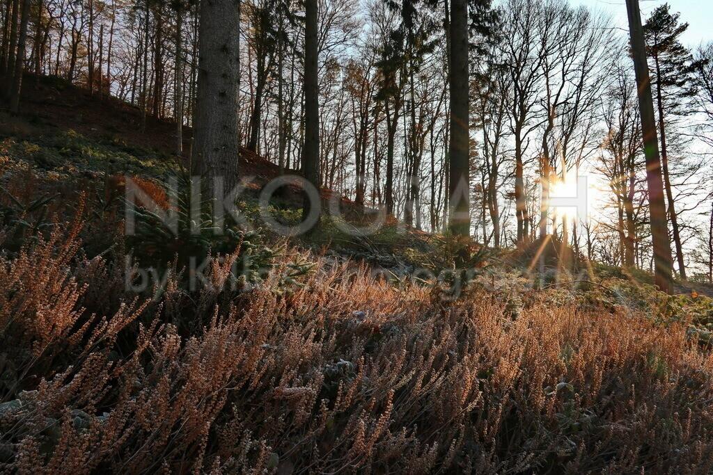 Herbstsonne im Wald | Die Sonnenstrahlen der Herbstsonne im Iserlohner Stadtwald.