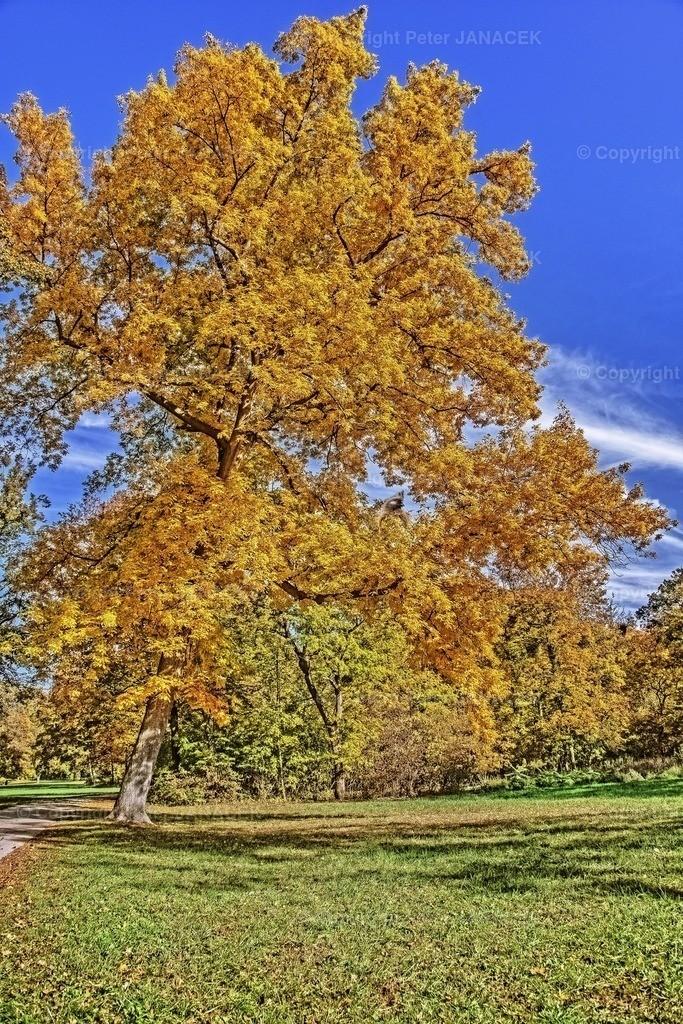 HerbstLebensbaum