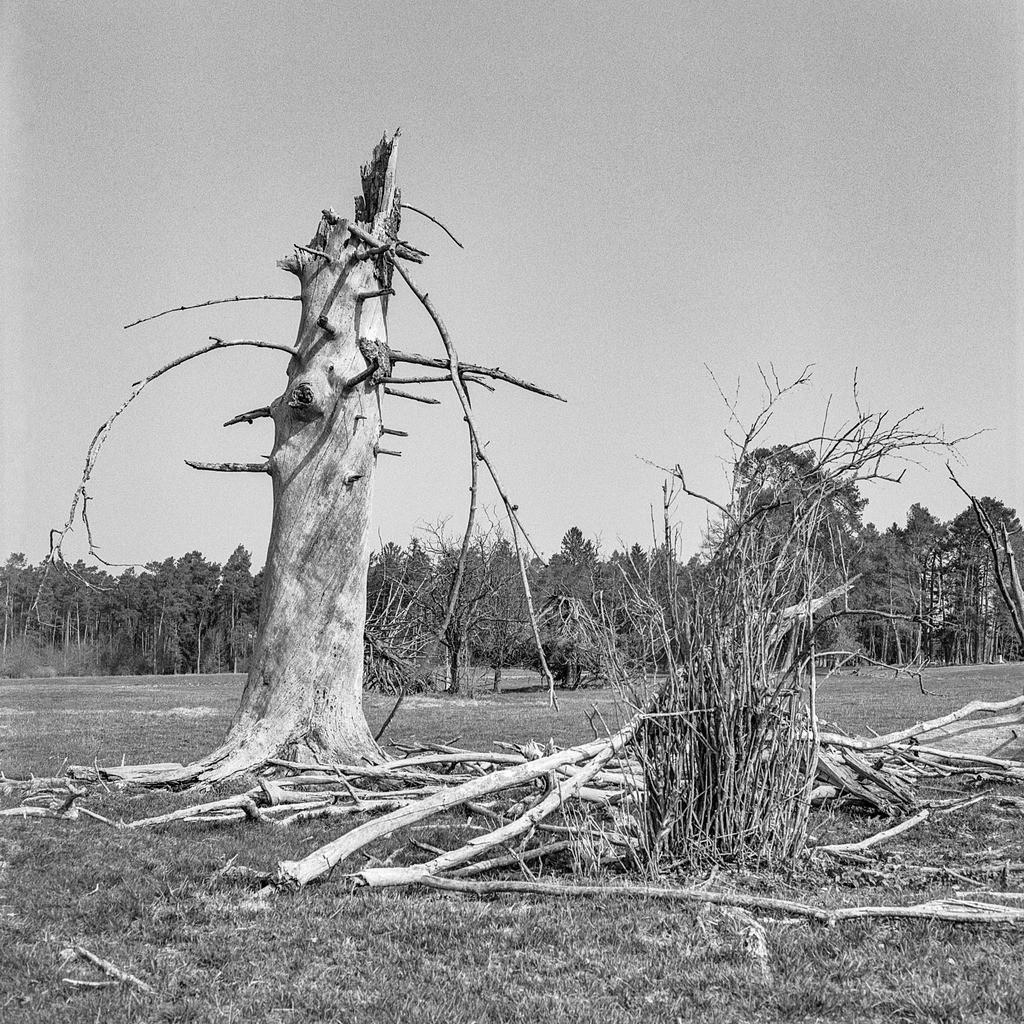 Stump | Mittelformat-Analogfotografie mit meiner Mamiya C330.