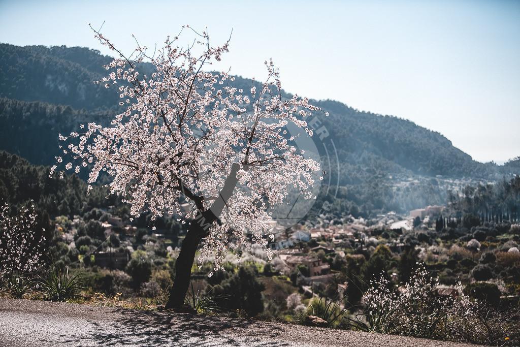 MR201204290101_MI1   Impressionen Mallorca