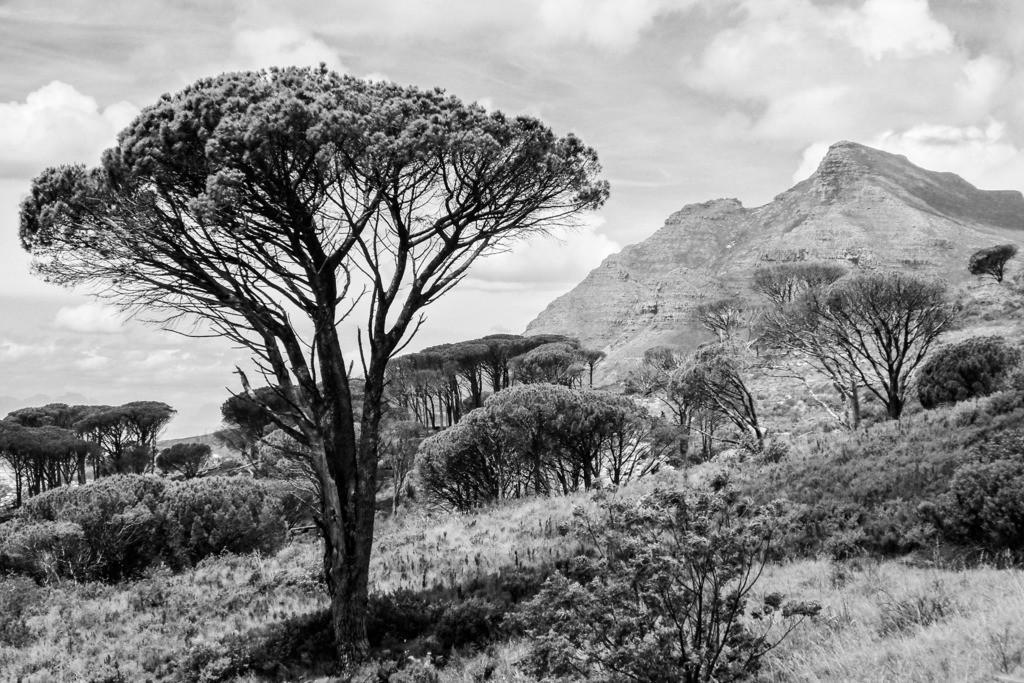 Print Südafrika - 018