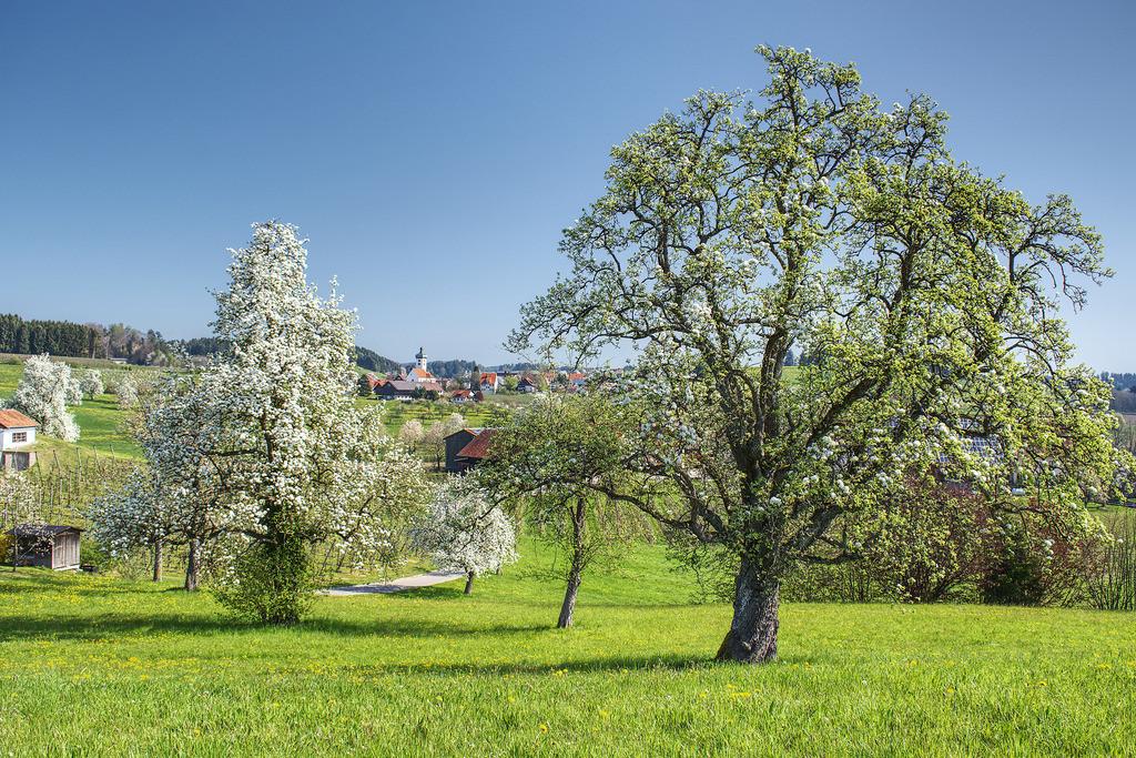 2019-04-19-Taubenberg-Unterreitnau-01