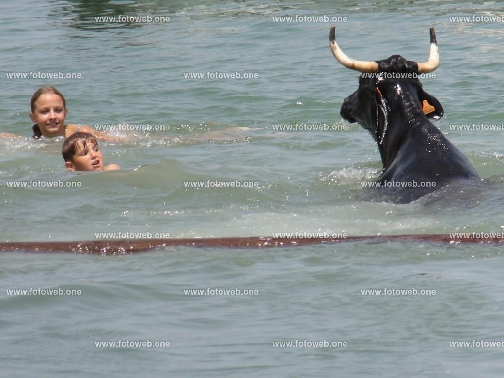 Schwimmunterricht mit dem Stier | Stier Schwimmen