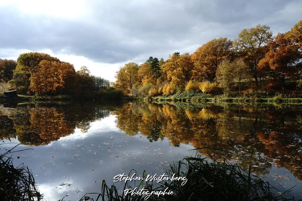 Schwarzbachweiher   Schwarzbachweiher bei Sembach im goldenen Herbstgewandt