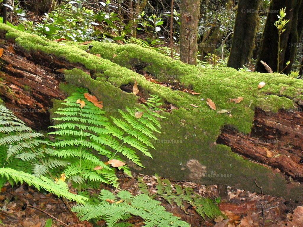 DSCF0124-1 | Im Cedro Wald