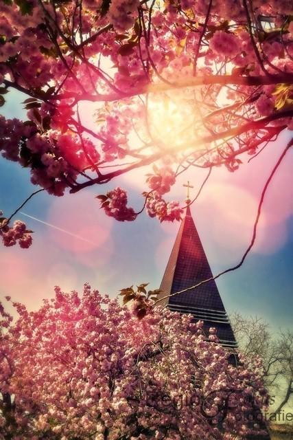 Romantischer Ausblick | Frei stehender Glockenturm der St. Thomasgemeinde, umrahmt von rosa Blüten und romantischem Licht