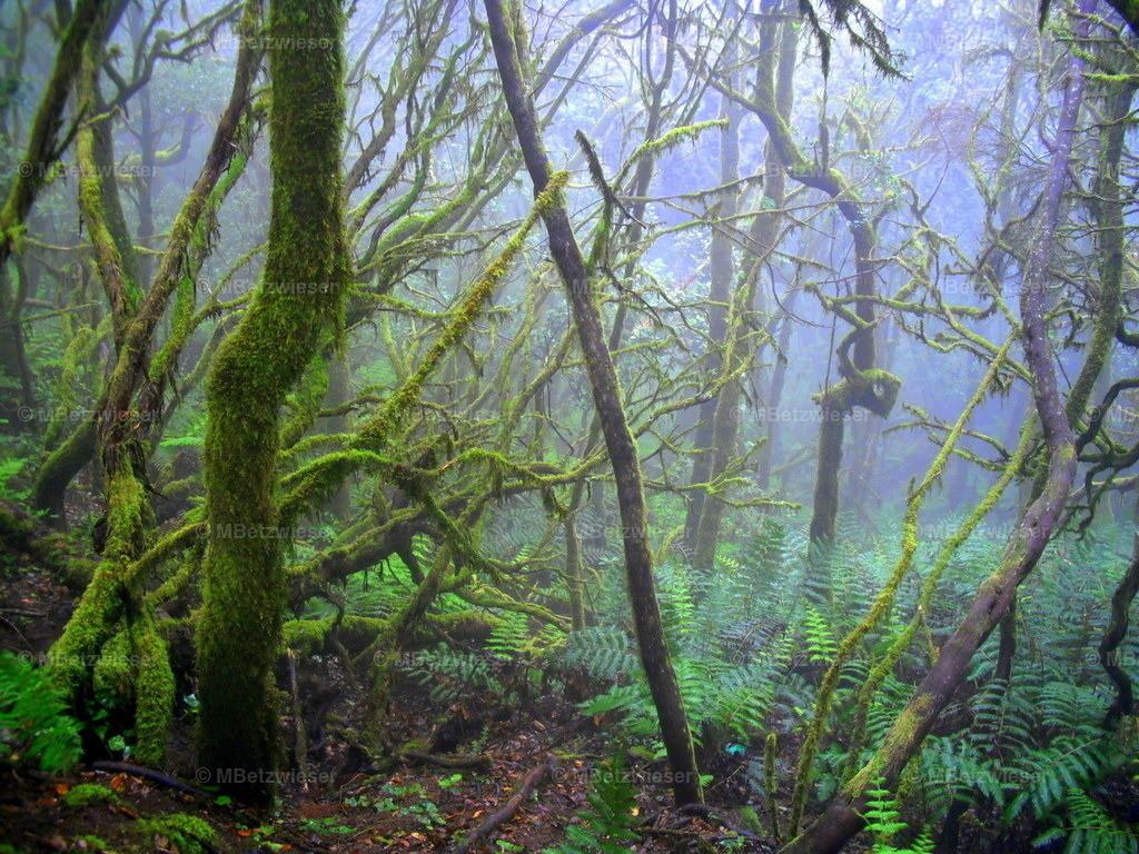 DSCF0020   Wie im Dschungel del Cedro