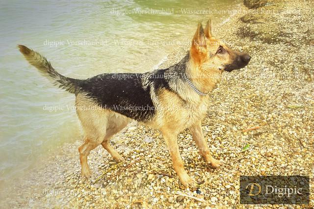 Hunde (161 von 415) | OLYMPUS DIGITAL CAMERA