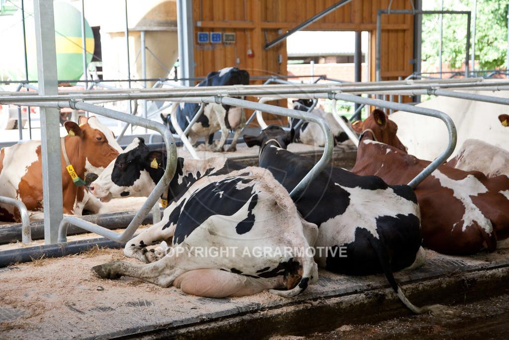 20110627-IMG_3013 | Milchkühe im Boxenlaufstall