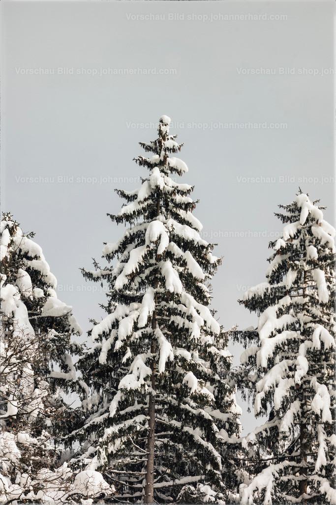 Winter in Grünsbach