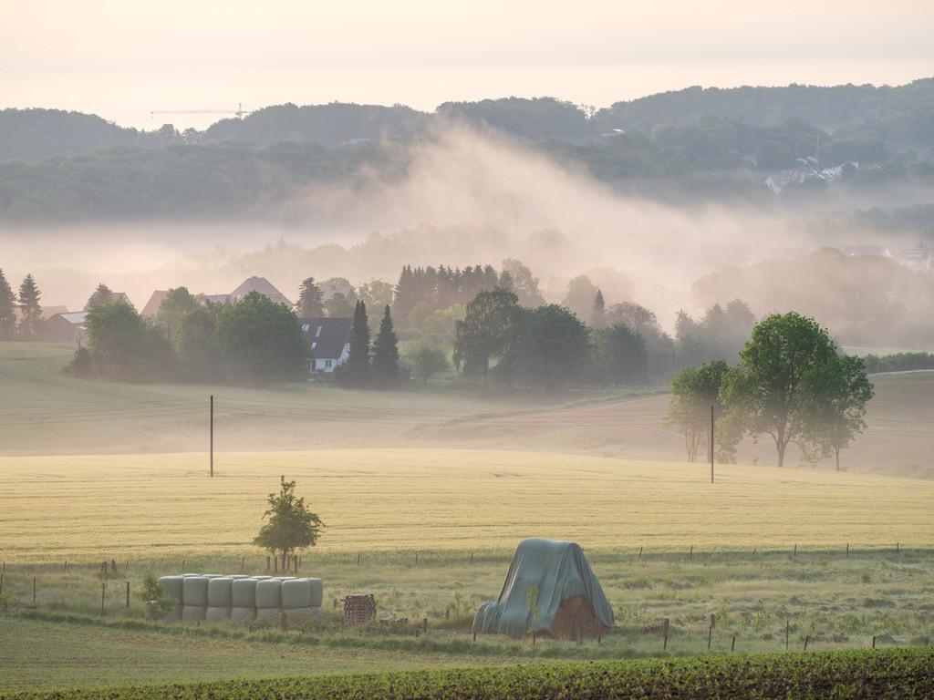 Morgennebel über den Feldern bei Kirchdornberg | Morgennebel über den Feldern am Teutoburger Wald bei Kirchdornberg.
