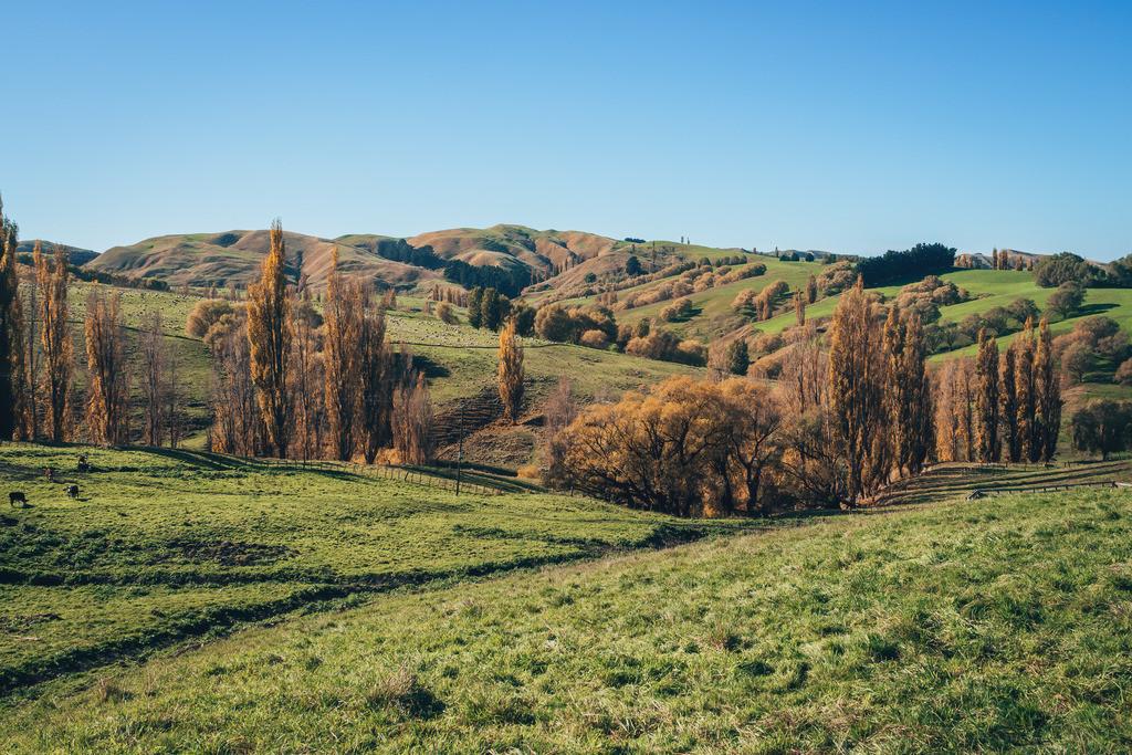 Hügelige Landschaft in Neuseeland | Hügelige Landschaft in Neuseeland