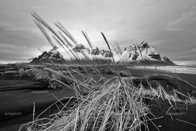 Bergkette vor schwarzen Sanddünen | Schwarzweißbild mit einer schneebedeckten Bergformation vor den Dünen eines schwarzen Lavasandstrandes, im Vordergrund eine mit Gras bewachsene Sanddüne,  die Grashalme werden vom Wind bewegt, große Tiefenwirkung - Location: Island, Südküste