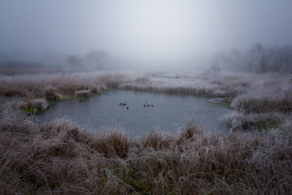 Winter im Hamberger Moor | Der Winter hält Einzug im Hamberger Moor.