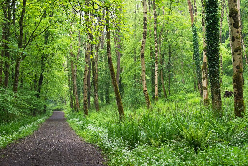 Best. Nr. lebensweg02   Wald bei Glenarm