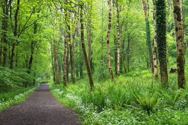 Lebensweg 02 | Frühlingswald Carnlough,Nordirland