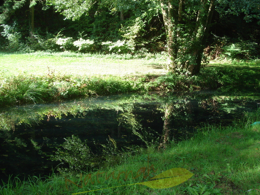 Grüner Wassertraum