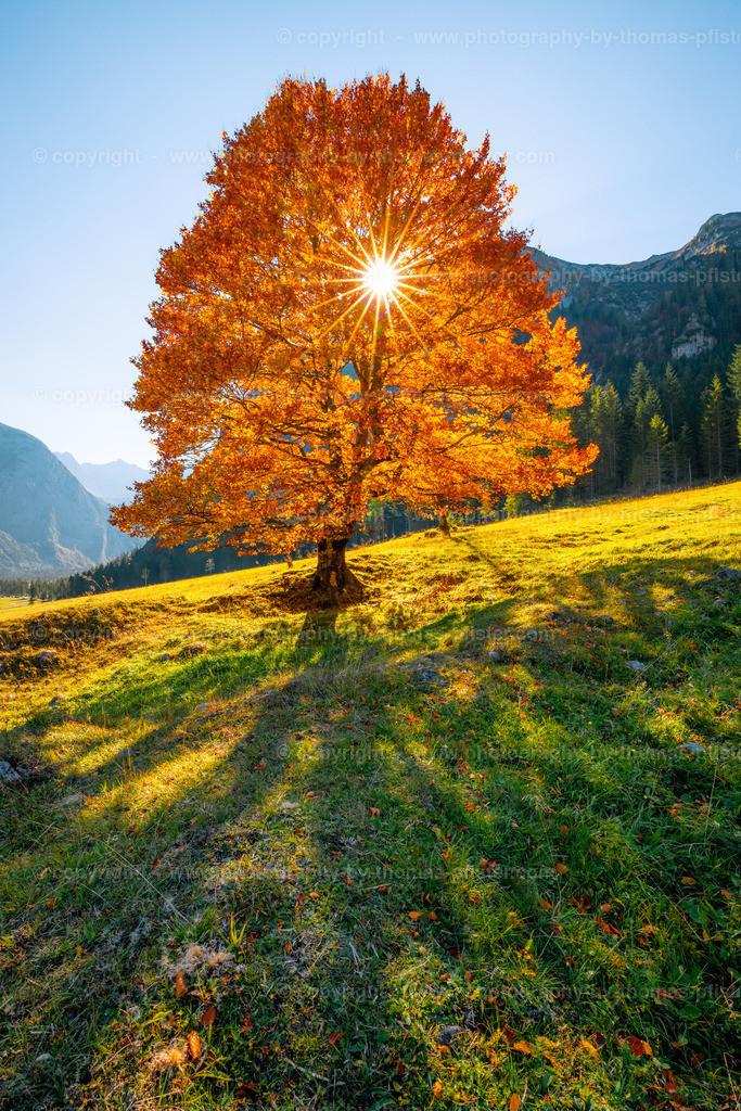 Ahornboden Herbst-2