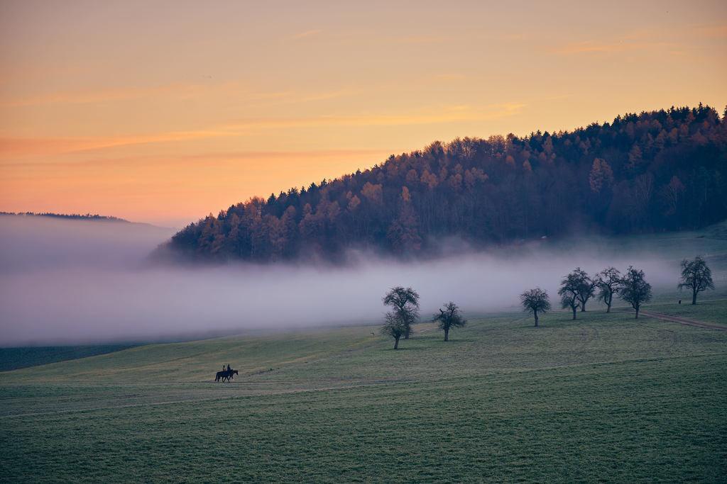 Wittershuser (Aadorf)