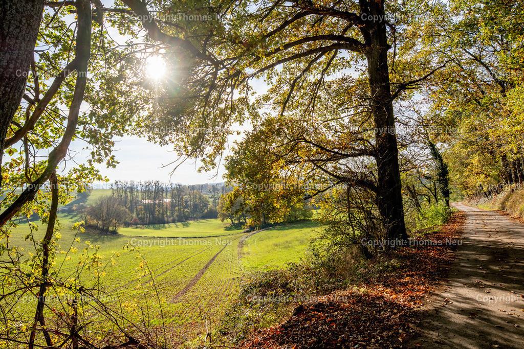 DSC_5137 | bre,bli,Adventsspaziergang , Schlierbacher Tal bis zum Kunstweg Lindenfels Fürth,, Bild: Thomas Neu