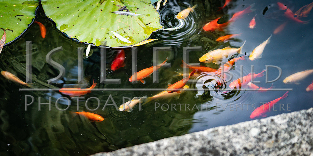 20200718-IsiLife webshop-A9_08708