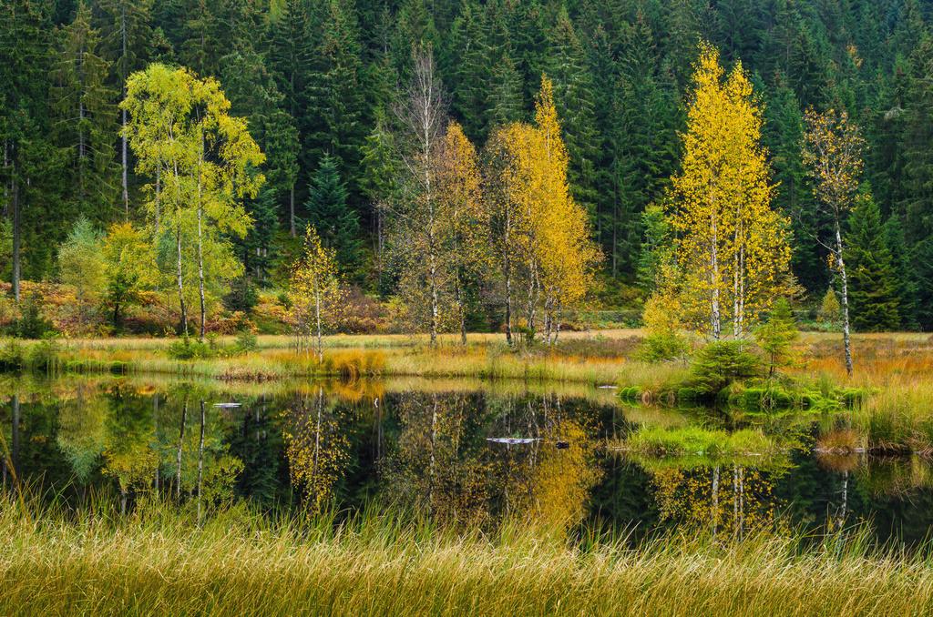Buhlbachsee   Herbstlicher Buhlbachsee im Nordschwarzwald