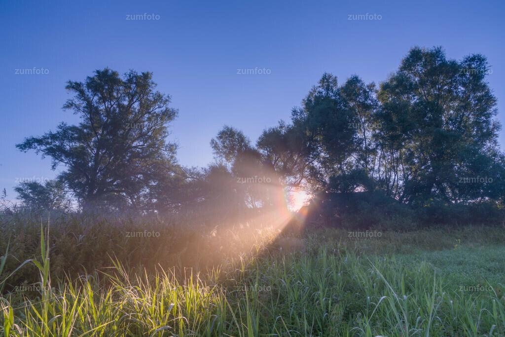 0-120814-8020-32 | --Dateigröße 5688 x 3792 Pixel-- Sonne als Scheinwerfer im Nebel.