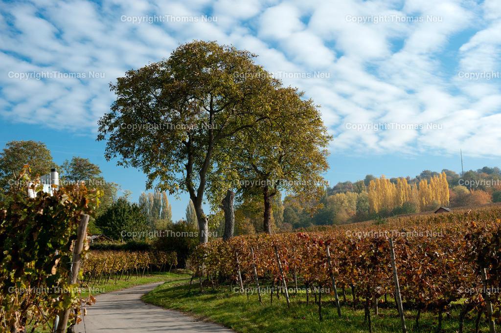 Herbst_Weinberge   ,, Bild: Thomas Neu