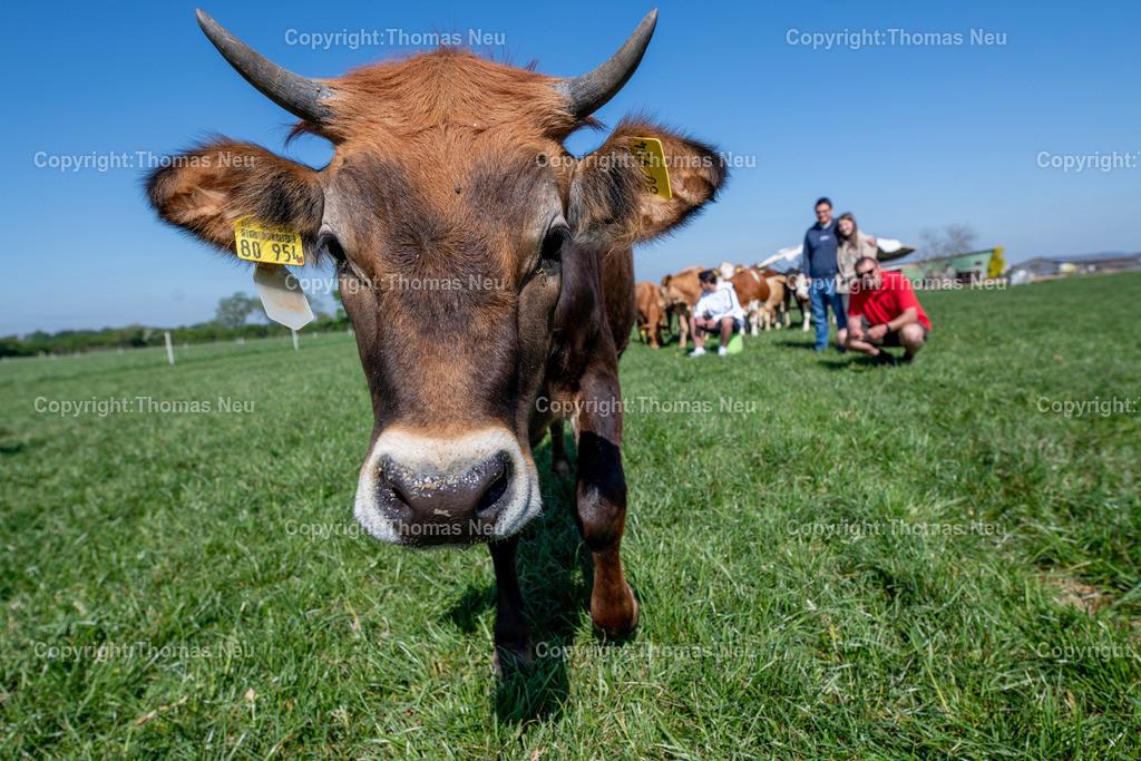 DSC_9966 | Bensheim, Schwanheim, FamilieSchweikert in Schwanheim nach 50 Jahren Viehhaltung jetzt mit ihren Rindern auf die Weiden, ,, Bild: Thomas Neu