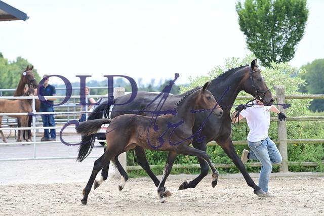 12 DE433330002621 FBR Vaderland - Quaterback_MGF_6772