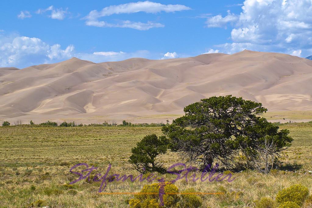 Große Sanddüne | Baum vor großer Sanddüne