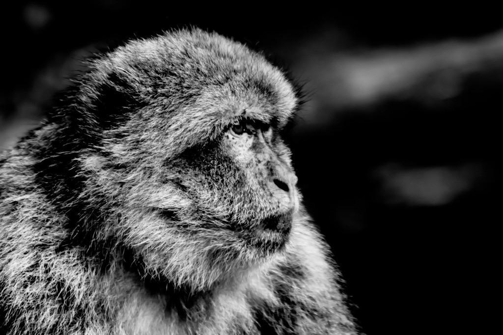 Ein Blick | Ein Blick, tausend Sichtweisen.   Siegfried Wache