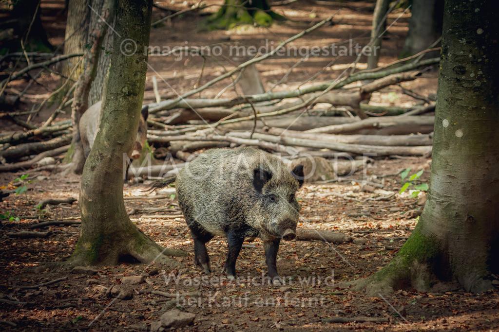 Wildpark-Kaiserslautern_20210918_1066
