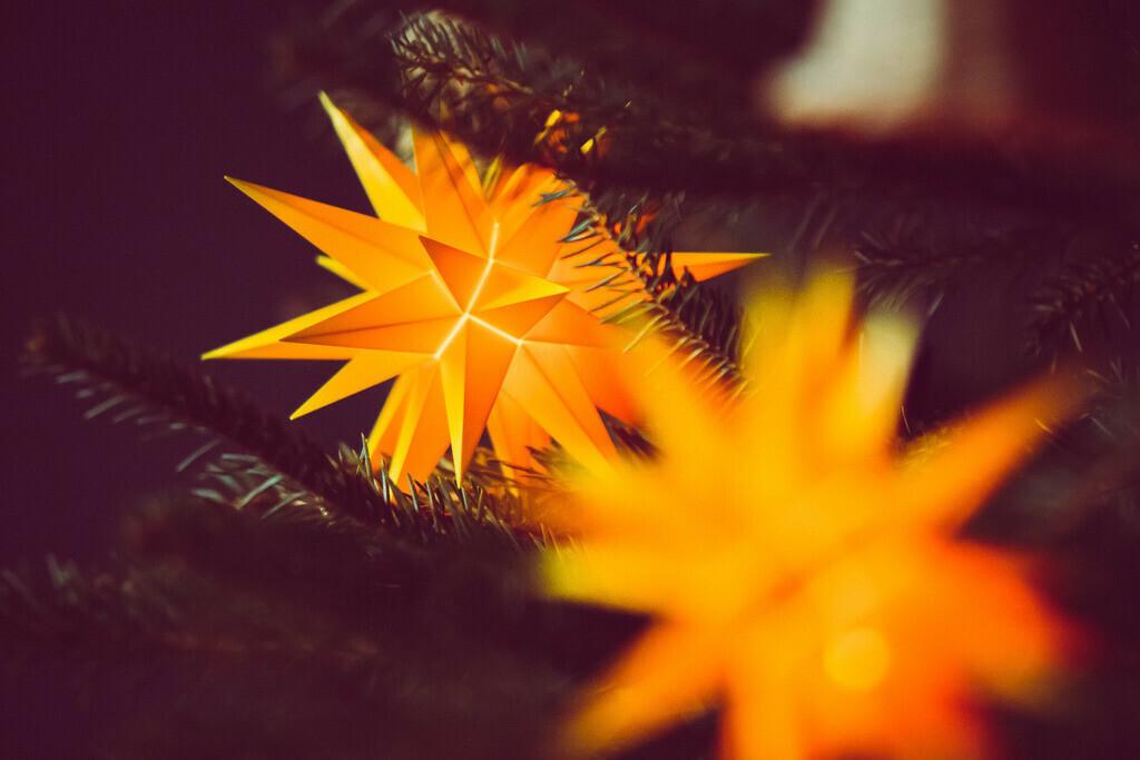 zwei Herrnhuter Sterne im Weihnachtsbaum