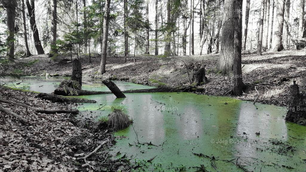 Wald_8_Partielle Farbe
